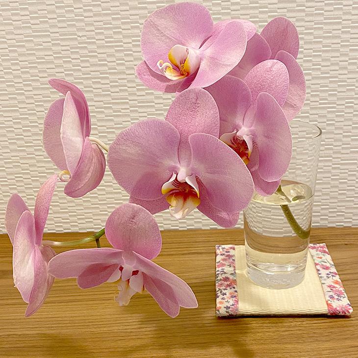 畳と胡蝶蘭セット